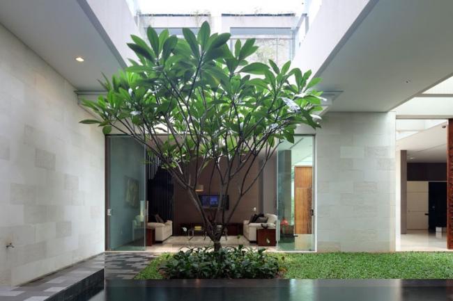 jardin interieur maison 15. Black Bedroom Furniture Sets. Home Design Ideas