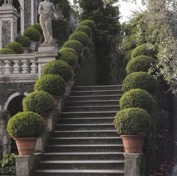 entree-escalier-buis