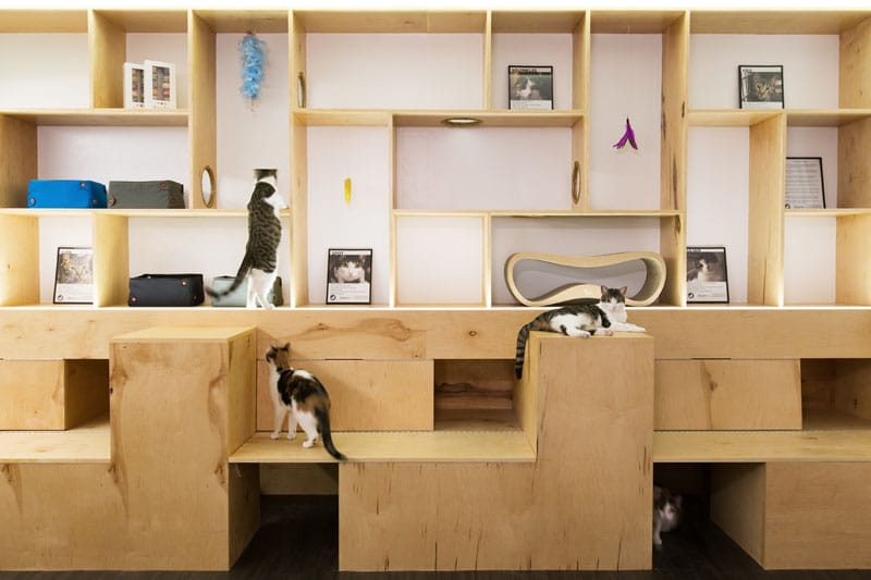 meow parkour un bar chats new york. Black Bedroom Furniture Sets. Home Design Ideas
