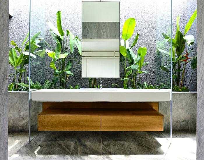 plantes-tropicales-salledebain