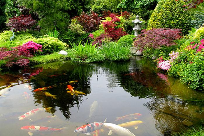 bassin-aquatique-japonais
