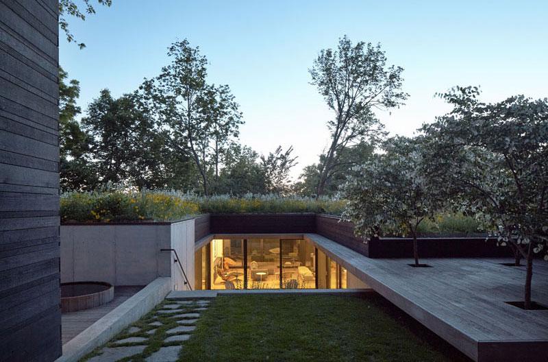arbres-rooftop