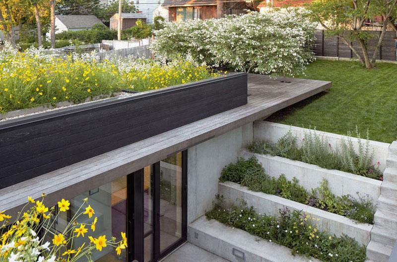 rooftop-vegetalise