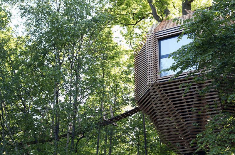 cabane-bois-arbre