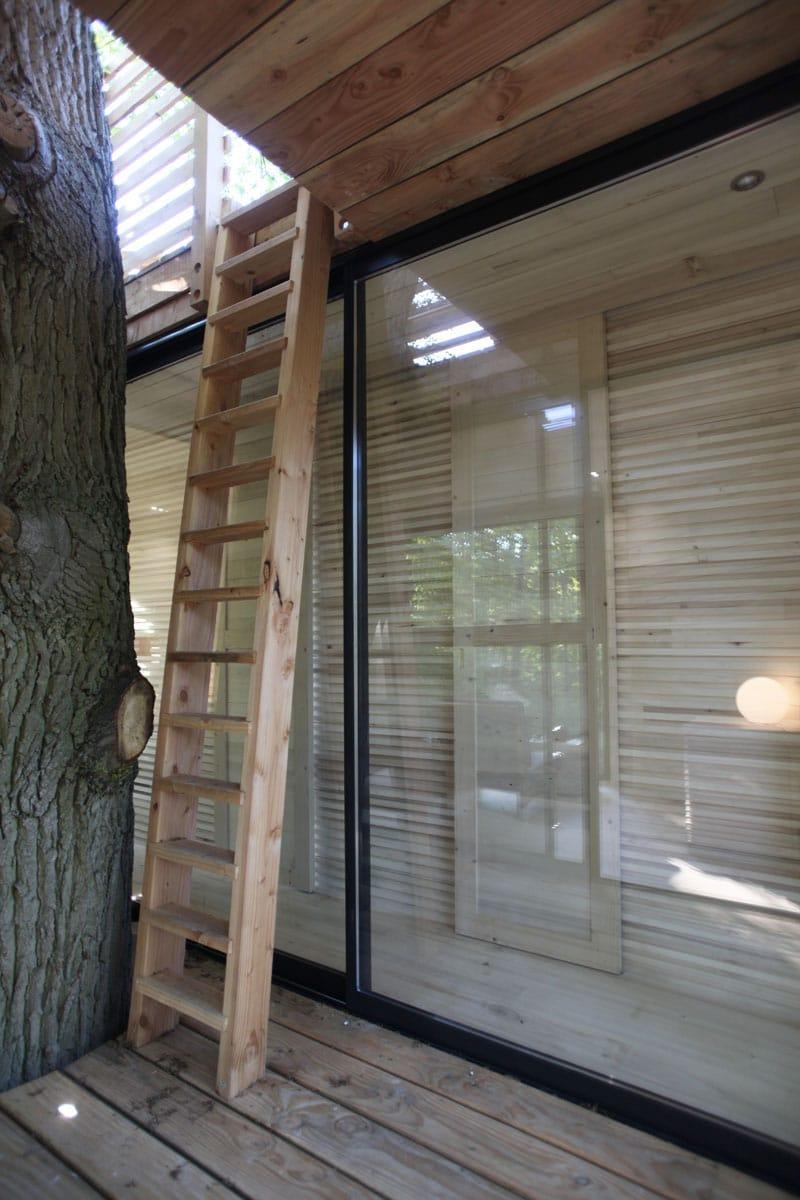 echelle-bois-arbre