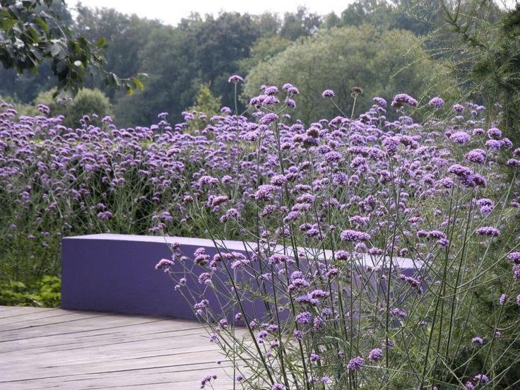 jardin-plantes-violettes