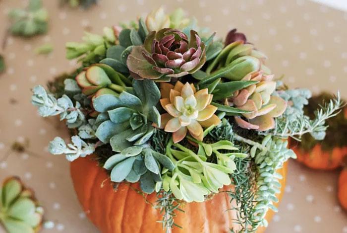 plante-grasse-citrouille-halloween