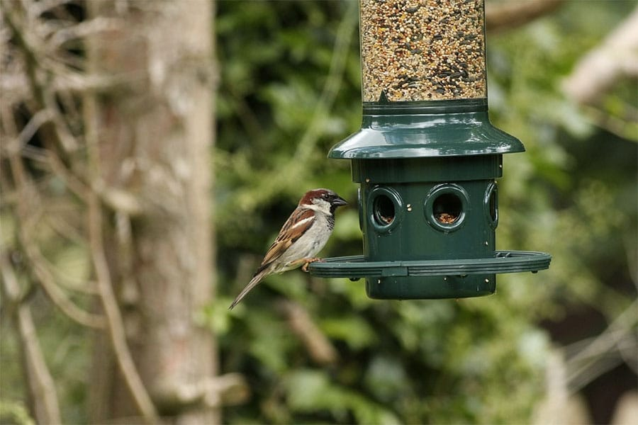mangeoire-oiseaux-jardin-eco