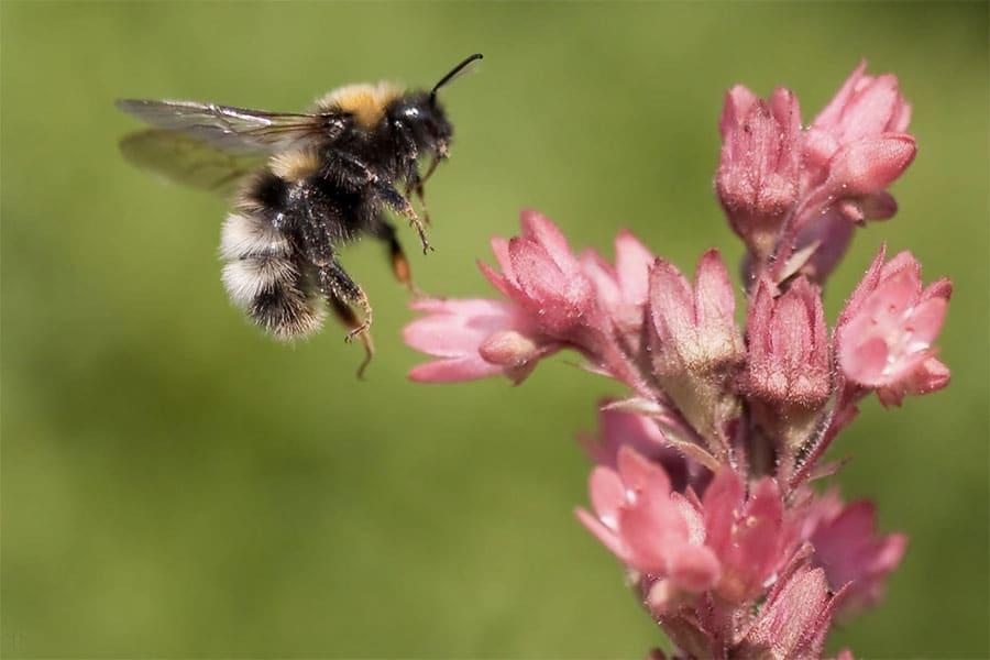 pollinisateurs-jardin